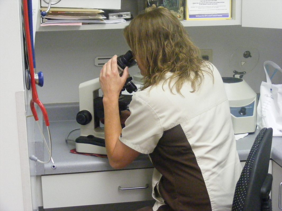staff laboratory work with microscope