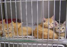 cats waiting for procedure